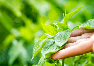 Total crop protection environment sustainability